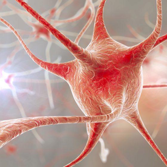 Neuronauka